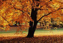 Photo of Какво символизира есента в китайската култура и медицина?